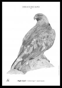 aigle avec cadre noir copie