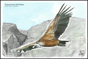 poster vautour fauve couleur pour internet